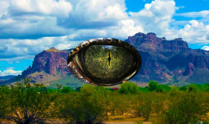 mountain reptile eye 700x418